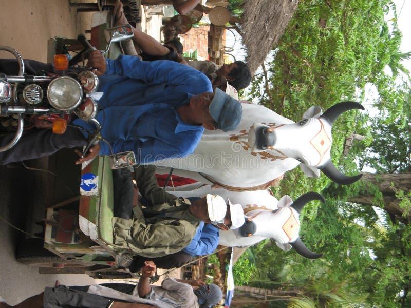 Oxen ceremony royalty free stock photos