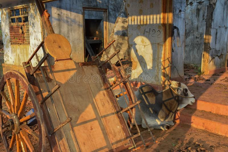 Oxevagn i skadehem royaltyfri bild