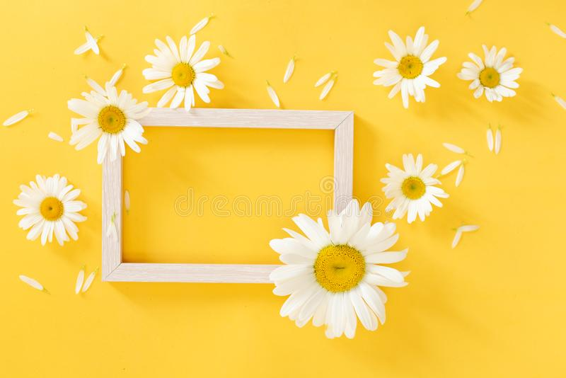 Oxeye daisies with a copy space on an orange and pink background arranged to form a frame or garland, colorful background, card stock photography