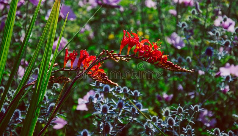 Oxford botanisk trädgård royaltyfri foto