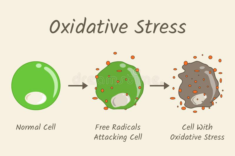 Oxidative Stress Diagram. Free radicals attacking cell. Vector illustration flat design stock illustration