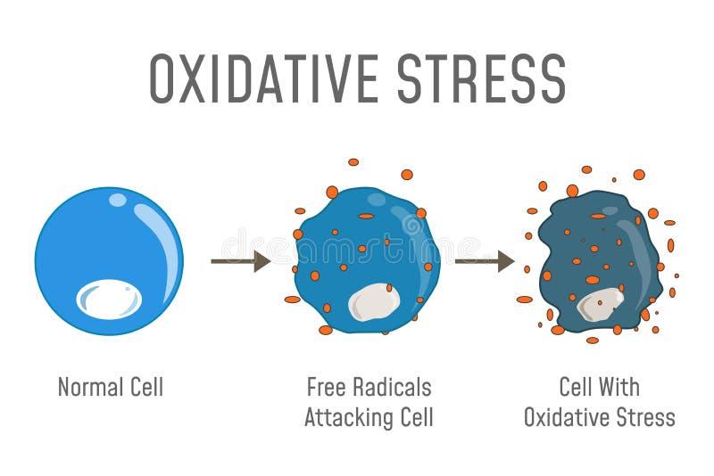 Oxidative stresu diagram royalty ilustracja