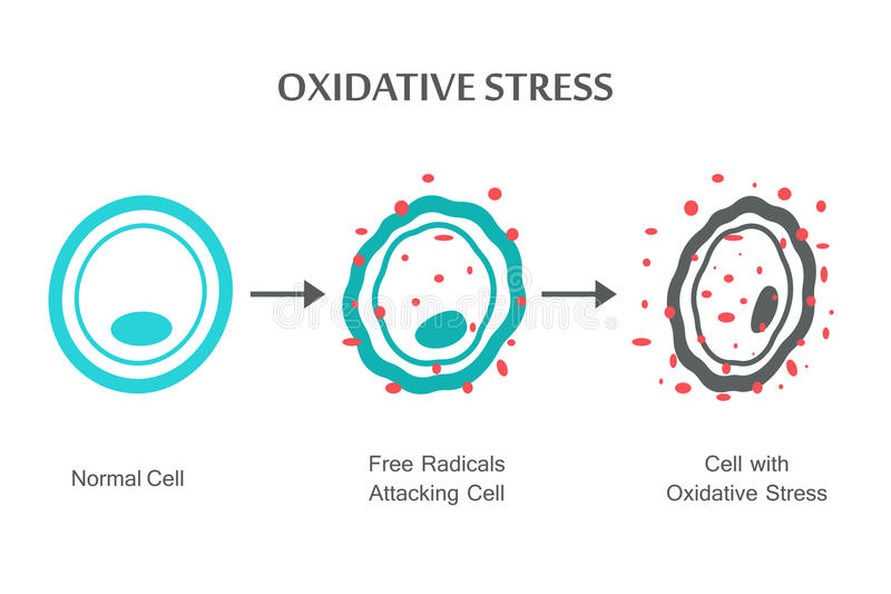 Oxidative stresu diagram royalty ilustracja
