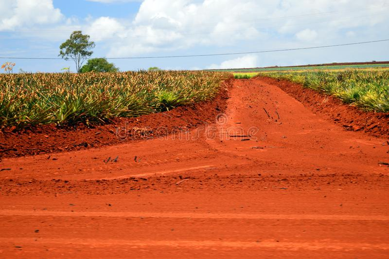 Red Oxidized soil. Oxidized soil at a pineapple plantation in Hawaii turns a brownish red stock photos
