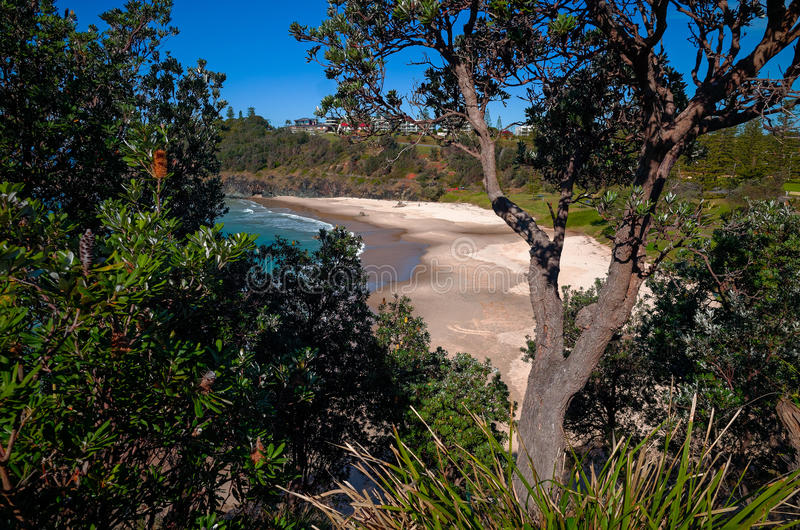 Oxley Beach at Port Macquarie Australia. Seen from Flagstaff Lookout. Beautiful Australian beach on the pacific ocean. View towards beach with surrounding grass stock photos