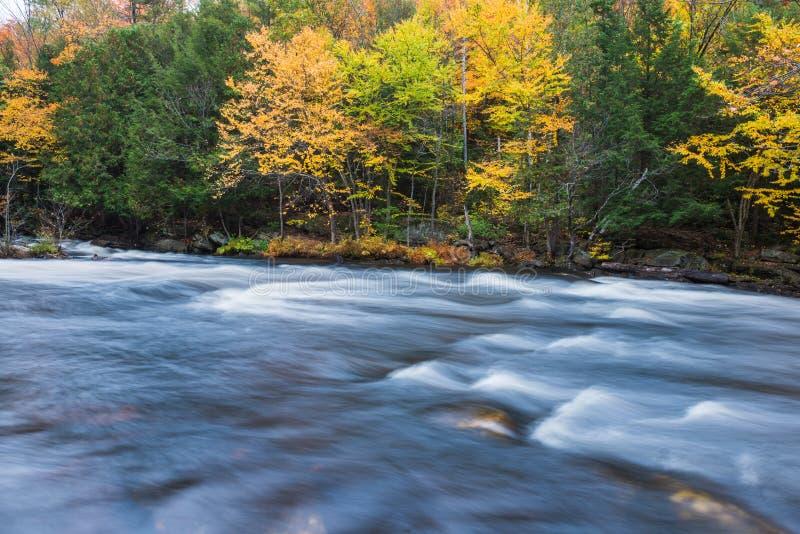 Oxtongue河河沿的五颜六色的秋天森林  库存图片