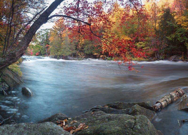 Oxtongue Rapids Autumn royalty free stock photo