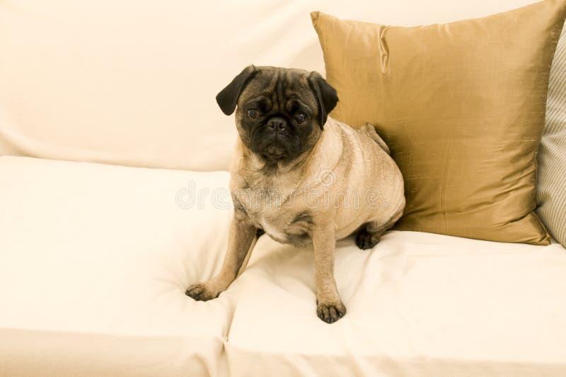 Download Oyg triste fotografia stock. Immagine di animale, seduta - 7317902