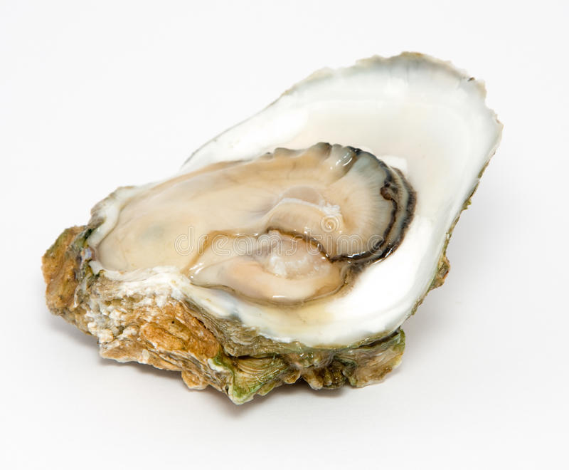 Download Oyster stock image. Image of nutrition, diet, health - 11631349