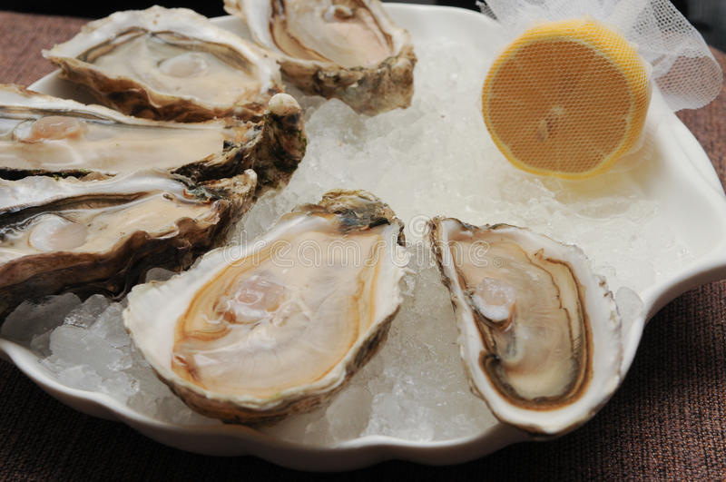 Oyster royalty free stock image