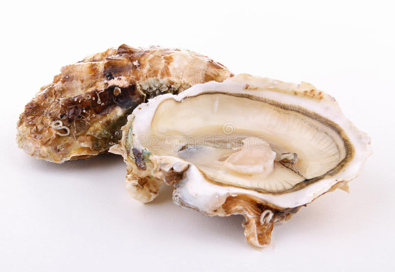 Oyster Stock Photography