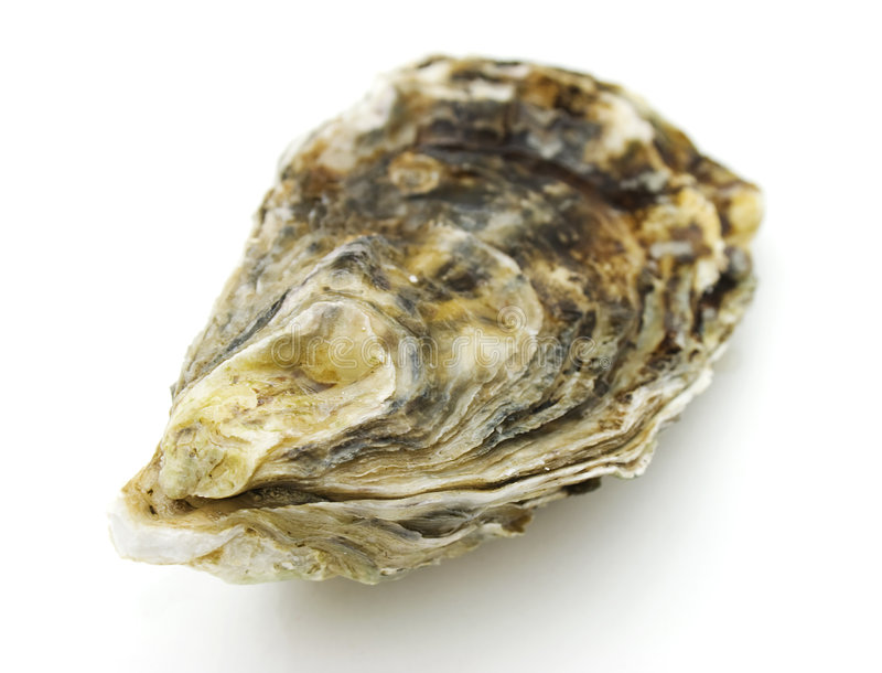 Oyster. Close-up view of oyster on white backgound