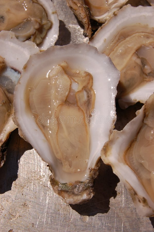 Free Oyster Royalty Free Stock Photos - 822888