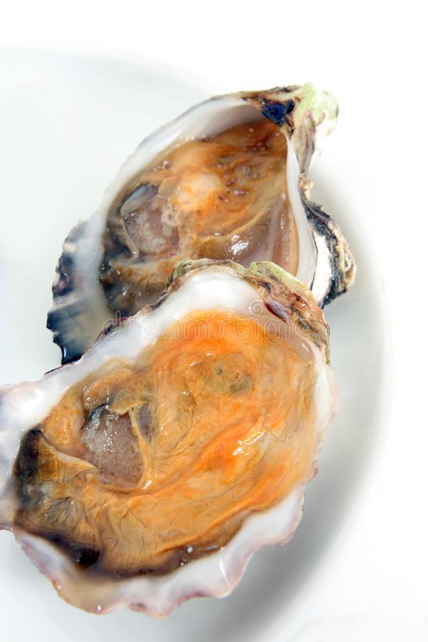 Oyster, or mussel royalty free stock image