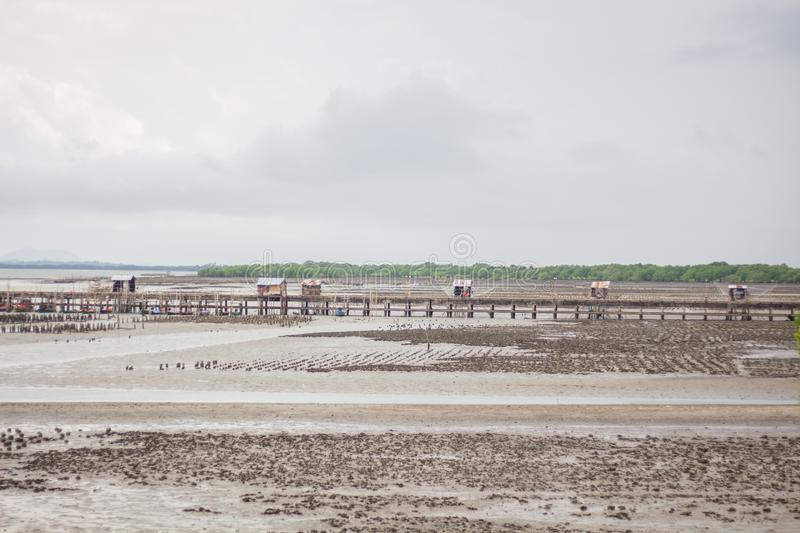 The oyster farm in the sea, Reduced sea range. Raised by bamboo poles and concrete pillars at Thailand royalty free stock photography