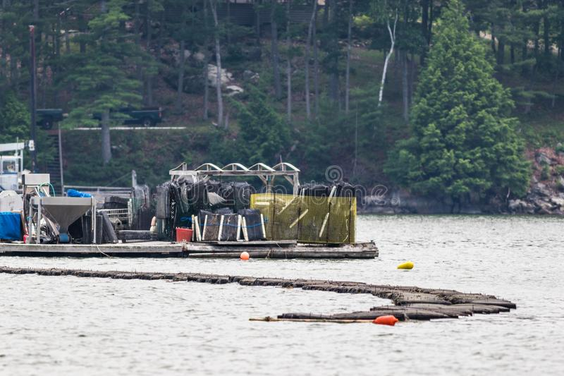 Oyster Farming In The Damariscotta River, Maine, Involving Traps And