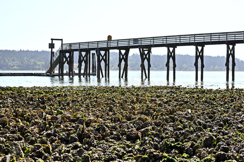 Oyster Field stock images