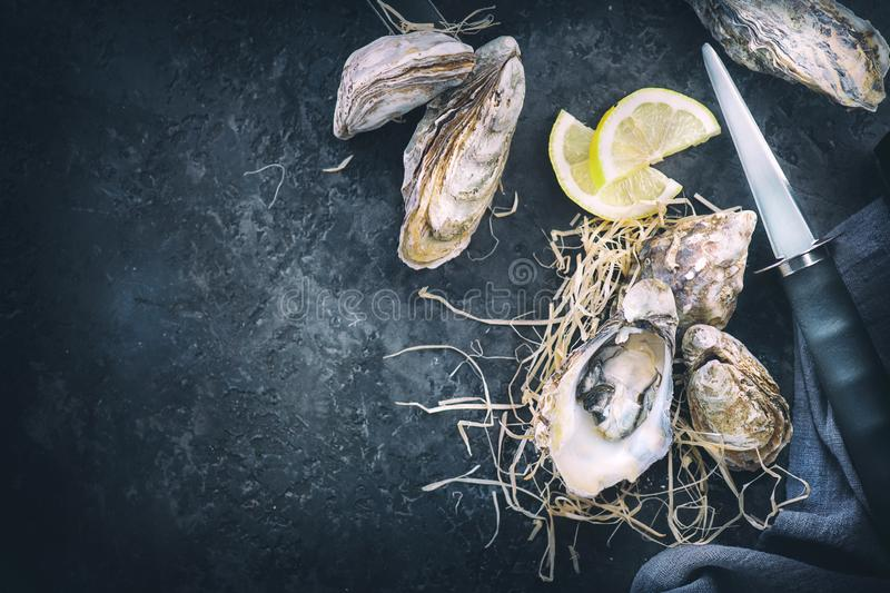 Oyster. Fresh oysters closeup with knife on dark background. Oyster dinner in restaurant. Gourmet food. Border design with copy space for your text. Top view royalty free stock images
