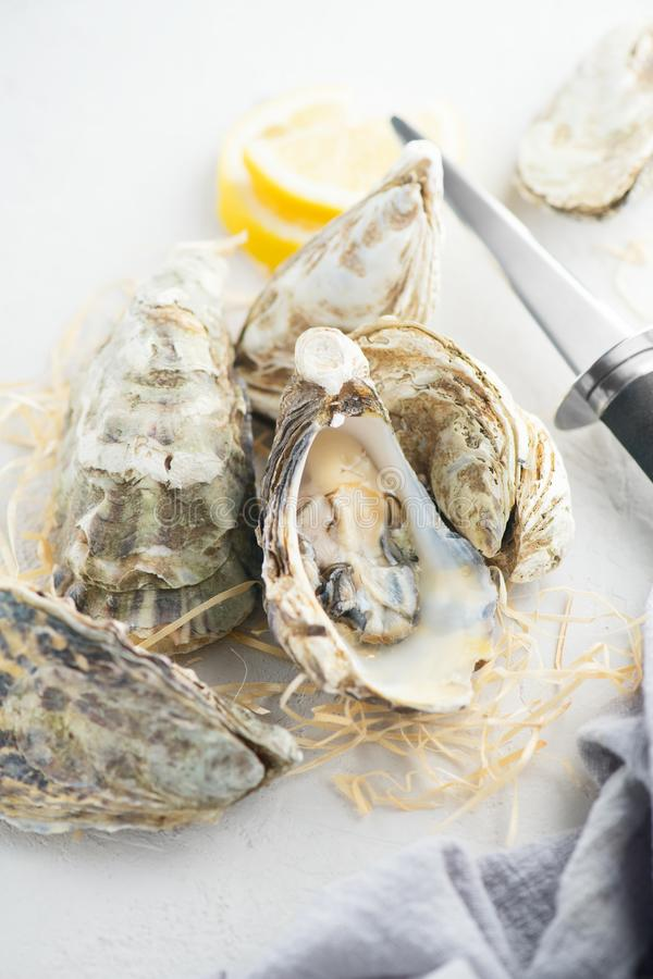 Oyster. Fresh oysters closeup with knife. Oyster dinner in restaurant. Gourmet food. Top view royalty free stock image