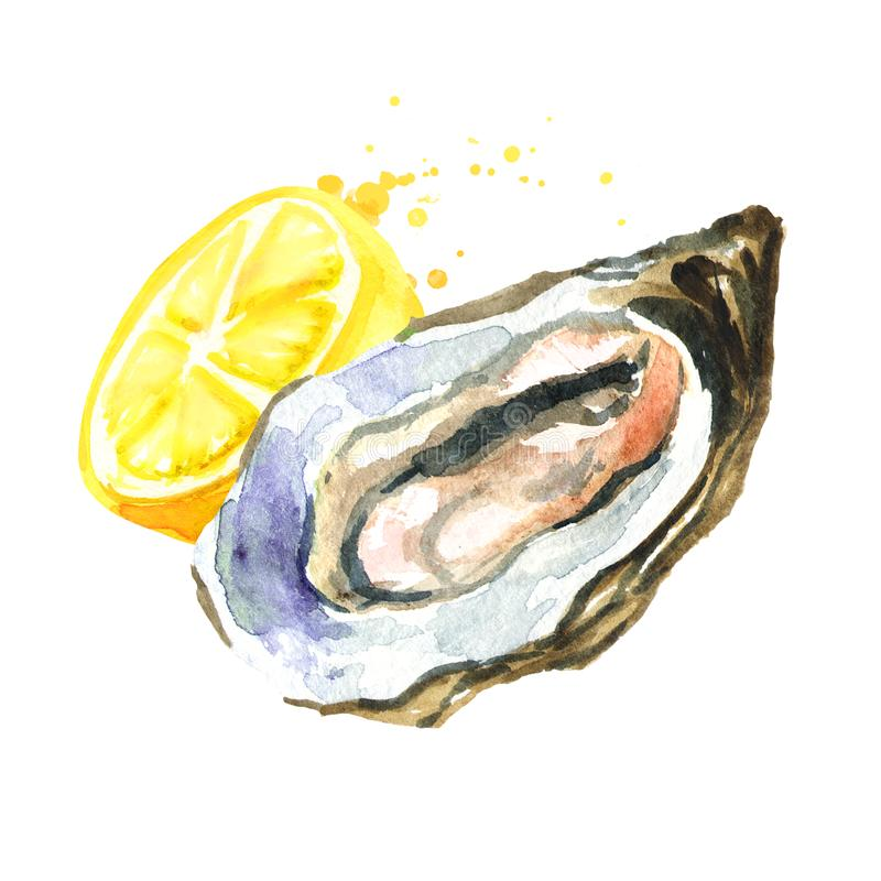 Oyster with lemon. Watercolor hand drawn illustration, isolated on white background.  vector illustration