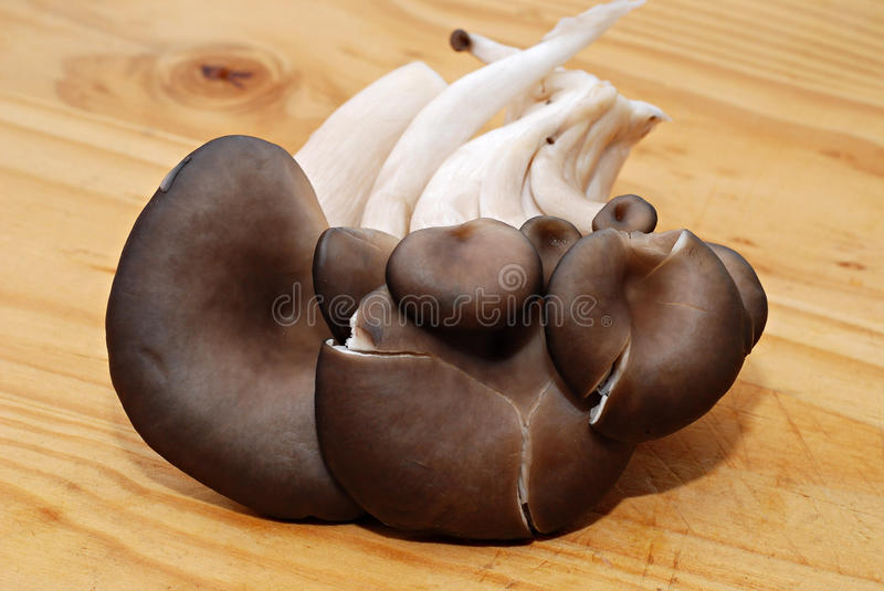 Oyster mushroom. On a wooden surface royalty free stock photography