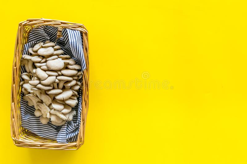 Oyster mushroom. Fresh raw veshenka in basket on yellow background top view copy space. Oyster mushroom. Fresh raw veshenka in basket on yellow background top royalty free stock images