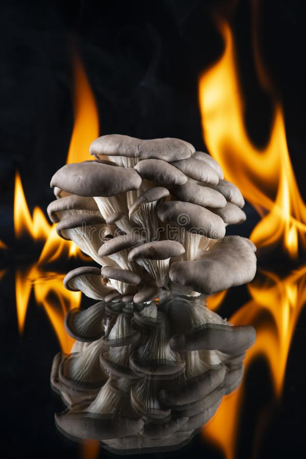 Oyster mushroom mushrooms on a mirror on the flames of fire. Black background. Food, cooking, cooking, organic. Closeup royalty free stock image