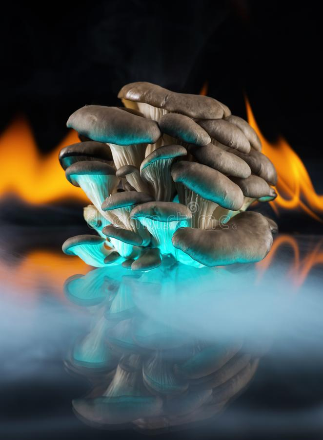 Oyster mushroom mushrooms on a mirror on the flames of fire in the smoke. Black background. Food, cooking, cooking, organic. Closeup stock photo