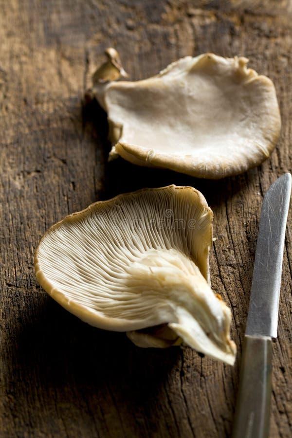 Oyster mushroom. On wooden table stock photos