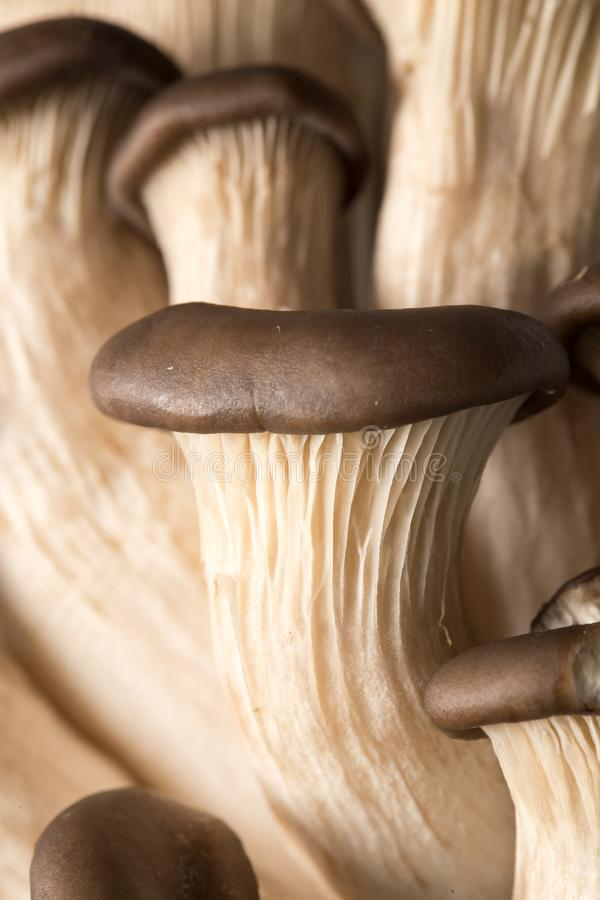 Oyster mushrooms as a background. Macro photo royalty free stock images