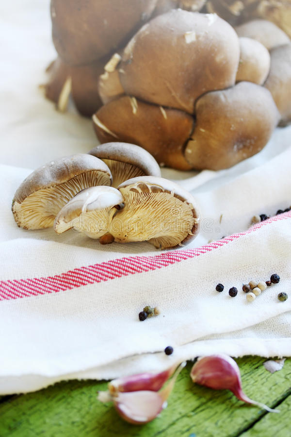 Oyster mushrooms on a towel. Oyster mushrooms with spices on a towel stock photography