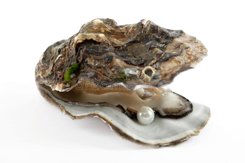 Oyster with pearl. Oyster with parl, culinary food with luck of finding jewelry