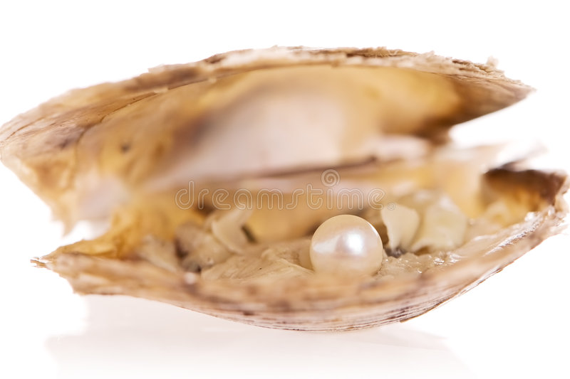 Oyster Pearl royalty free stock photo