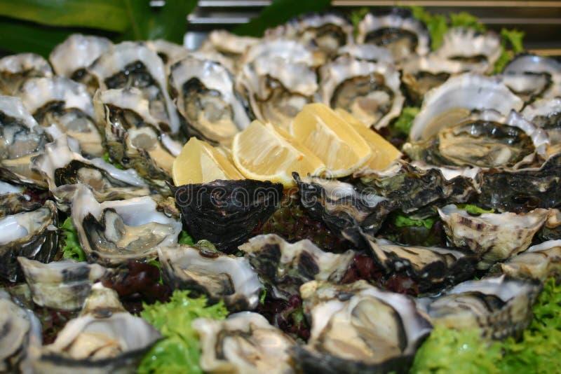 oyster platter zdjęcie stock