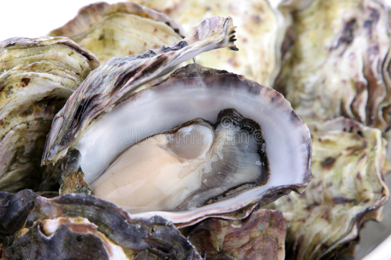 Oyster in shell. Opened natural oyster in shell