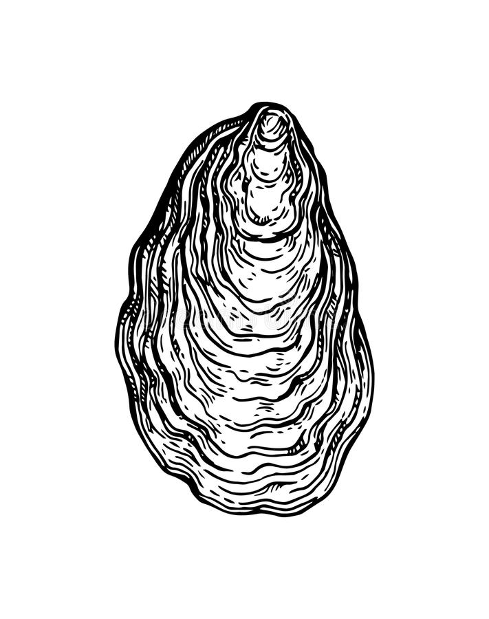 Oyster shell ink sketch. Isolated on white background. Hand drawn vector illustration. Retro style stock illustration