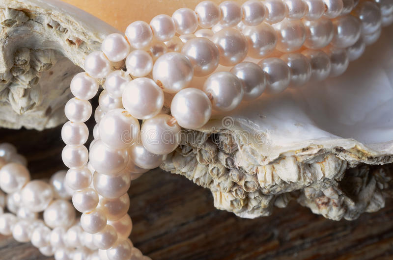 Oyster Shell and Pearl Necklace stock images