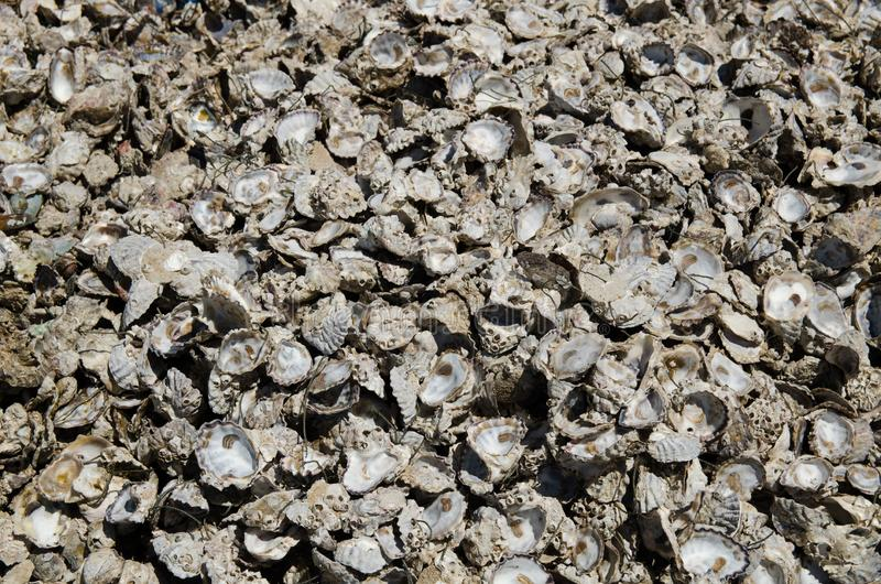 Oyster shell stock photography