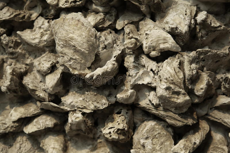 Oyster shell wall stock photos