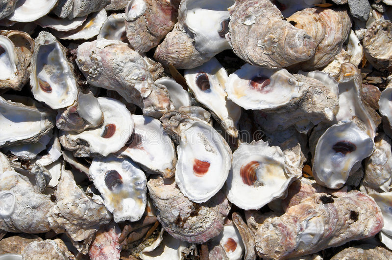 Oyster Shells royalty free stock image