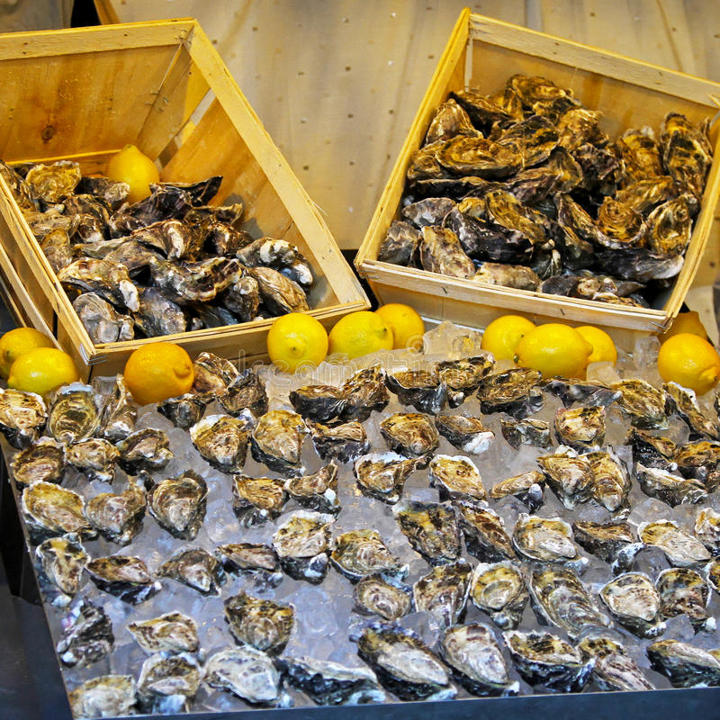 Download Oyster shells stock photo. Image of food, muscle, shell - 21742574