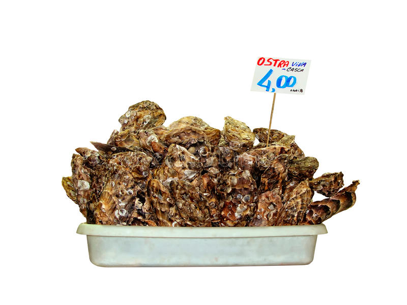 Download Oyster shells for selling stock photo. Image of slimes - 23147556