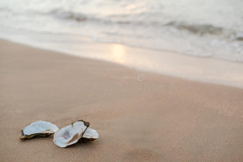 Oyster shells on the surf line with sand on the sea beach, as a concept of summer holidays, sea resort, spa. Picturesque oyster shells in the soft sunset light royalty free stock photo