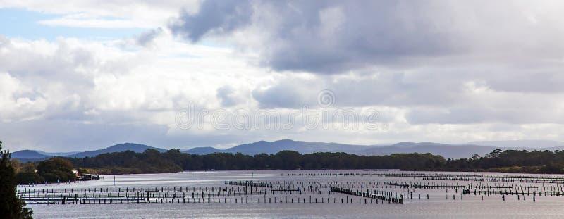 Oystercatching en Australie de Forster image libre de droits