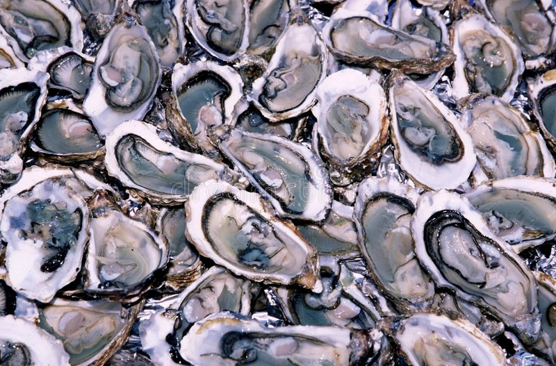 Oysters 1 royalty free stock photography