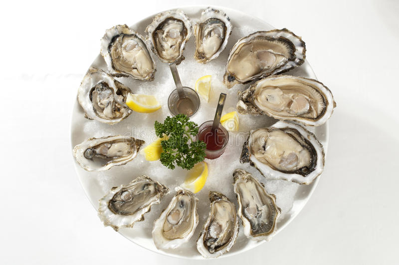 Download Oysters stock photo. Image of fine, flacour, lunch, oysters - 25929696