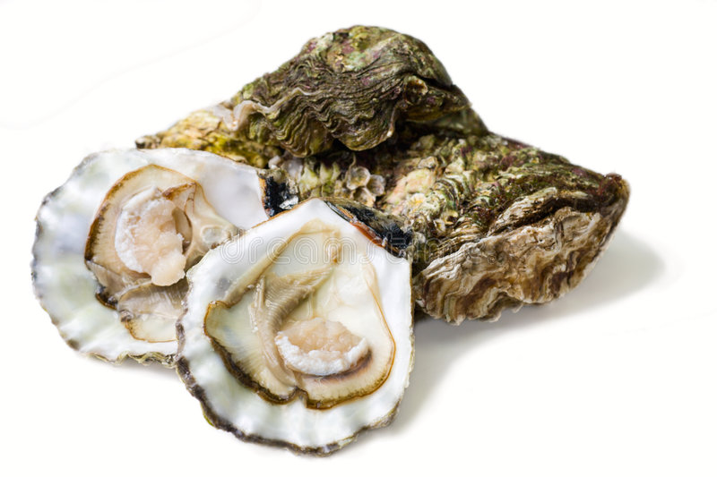 Oysters. Fresh alive oysters on a white background