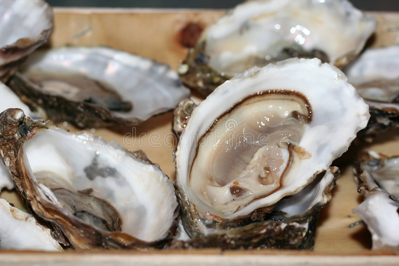Download Oysters stock image. Image of luxury, fares, dish, bowls - 7362893