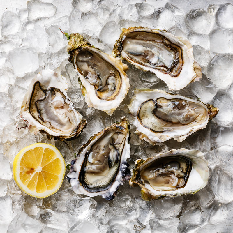 Free Oysters Stock Photo - 76331280