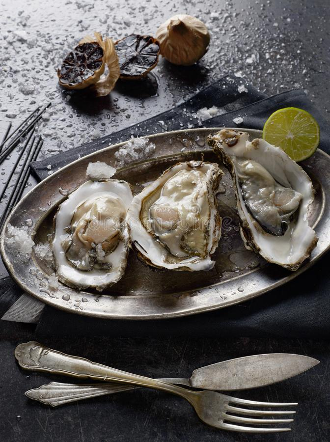 Oysters from above royalty free stock image